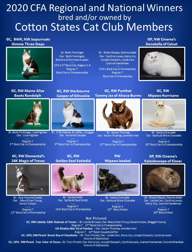 Click to enlarge image 2019-2020A Winning Cats.jpg